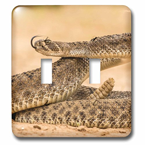 Diamond Texas Plate - 3dRose Danita Delimont - Snakes - Texas, Hidalgo Co., Western diamondback rattlesnake coiled to strike. - Light Switch Covers - double toggle switch (lsp_260096_2)