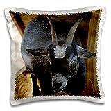Susans Zoo Crew animals - Black And White Goat Under Wood Structure Animal Farm Caprine - 16x16 inch Pillow Case (pc_215947_1)
