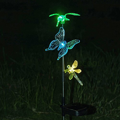 Chameleon Solar Lights in Florida - 5