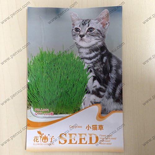 semillas al por mayor original de semillas paquete de hierba, hierba de gato, 200 partículas de semillas / bolsa: Amazon.es: Jardín