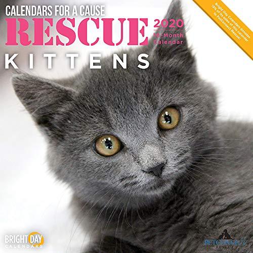 2020 Rescue Kittens Wall Calendar