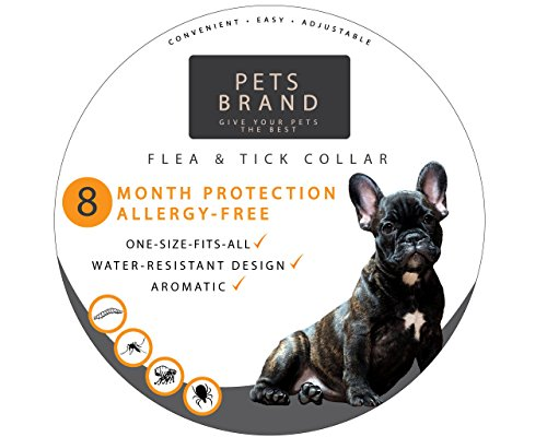 Flea and Tick Collar for Pets - Flea Dog Collar | Stops Bites, Itching, Protect from Insects, Larvae, Eggs and More - 8 Month Flea Collar Protection - Hypoallergenic, Waterproof, (Flea Rid Shampoo)