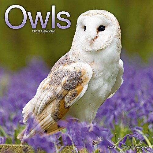 Owl Calendar - Cute Animal Calendar - Calendars 2018 - 2019 Wall Calendars - Animal Calendar - Owls 16 Month Wall Calendar by -