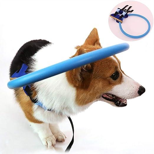 Dispositivo De Guía Del Arnés Para Perros Ciegos Anillo ...