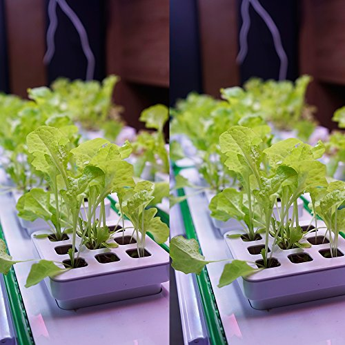 ❥ Indoor Hydroponic Herb Garden Kit, Hydroponics Growing System Herb Garden Light for Tomatoes Plants, 360 Degree Adjustable Arm, Low Water Alarm, Reading Mode - Seeds Not Included - Best Gift Hydroponic System 2