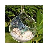 Binwwede Light Bulb Hanging Glass Planter Round Air Plant Terrarium Home Decorations (15 cm, Round)