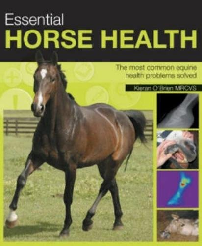 Necessary Horse Health: The Most Common Equine Health Problems Solved