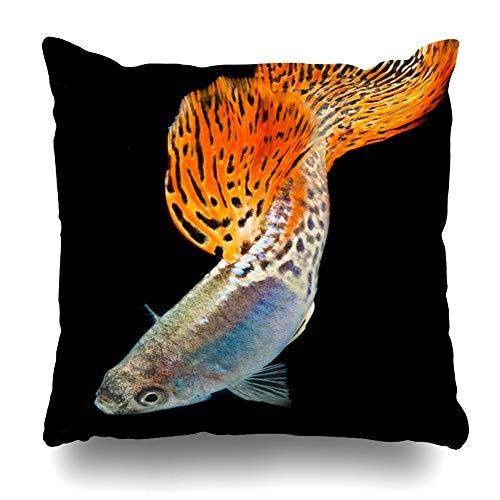 Ahawoso Throw Pillow Cover Fish Red Lace King Cobra Motion Guppy Accosting Albino Aquarium Aquatic Design Home Decor Pillow Case Square Size 20x20 Inches Zippered Pillowcase