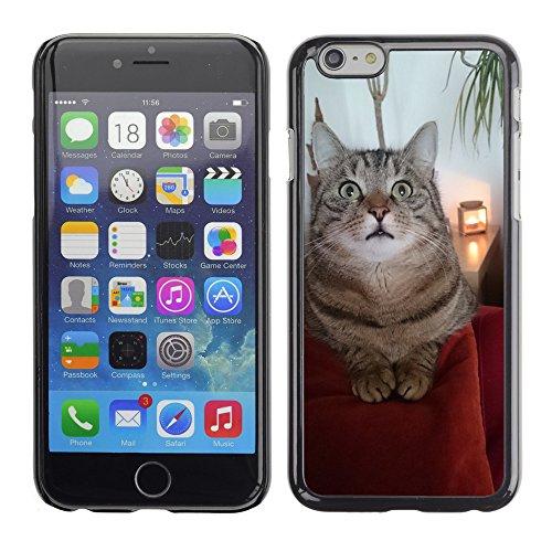 "Bild Hart Handy Schwarz Schutz Case Cover Schale Etui // M00135032 Katzen Tier Haustier // Apple iPhone 6 PLUS 5.5"""