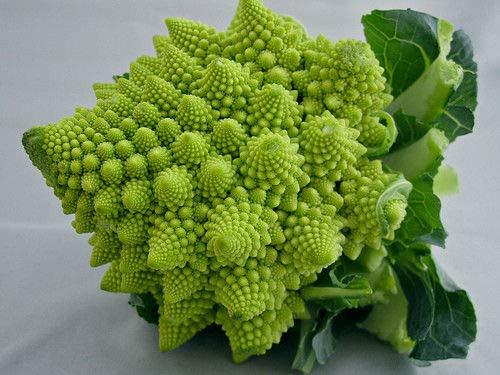 "3 Live 3-5"" inch Seedlings Romanesco Broccoli Rare Brocoflower Fractal Healthy"