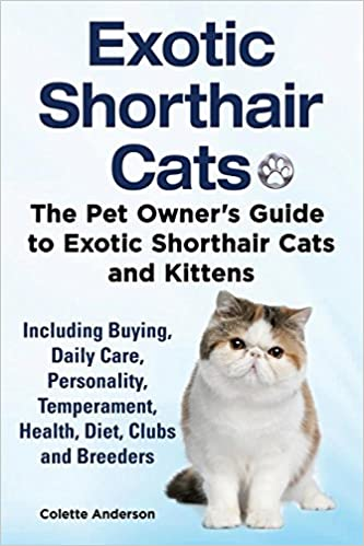 Exotic Shorthair Cats The Pet Owners Guide To Exotic Shorthair Cats