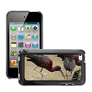 Etui Housse Coque de Protection Cover Rigide pour // M00113190 Pájaro Bill Ibis brillante // Apple ipod Touch 4 4G 4th
