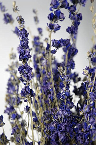 Wayfair Dried Larkspur Purple 15 Stems