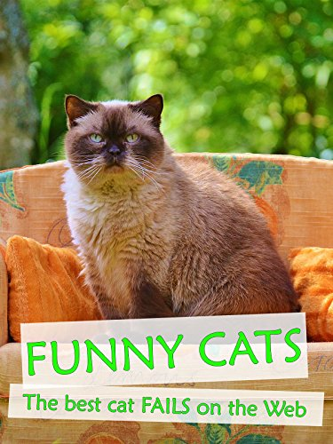 Funny Cats - The best cat fails on the Web (Best Videos For Cats)