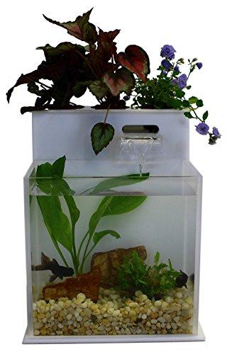 51bzxJ NSgL - Fin to Flower Aquaponic Aquarium Mini System A
