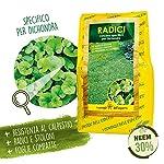 I-Consigli-DellEsperto-Radici-Concime-Organominerale-Specifico-per-Dichondra