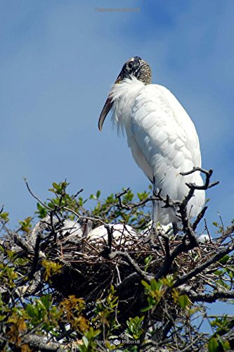 Awesome Wood Stork with Eggs in her Nest Bird Journal: 150 Page Lined Notebook/Diary PDF