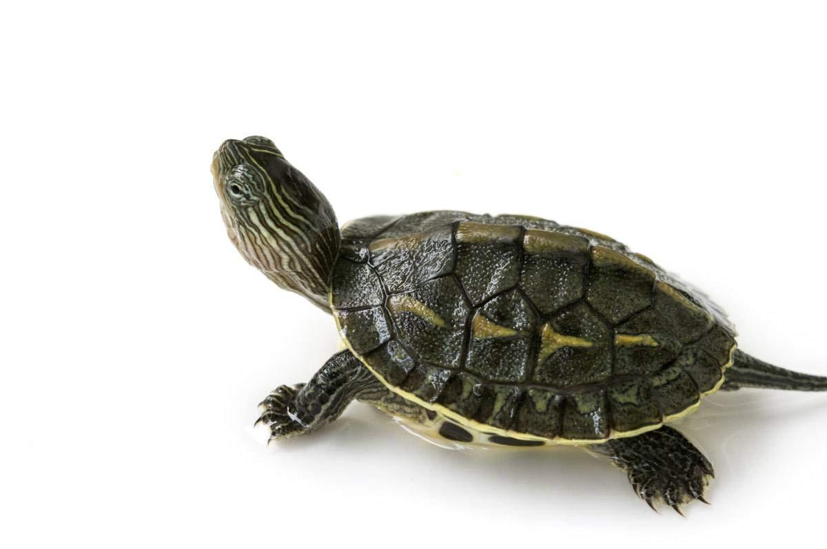 11lbs Bulk Non-GMO Dried Mealworms for Reptile, Tortoise ; Amphibian,Lizard ;Wild Birds; Chichens; Duck etc 4