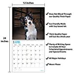 2020 Border Collies Wall Calendar by Bright Day, 16 Month 12 x 12 Inch, Cute Dogs Puppy Animals Colley 9