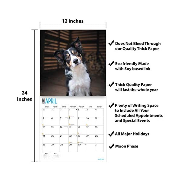 2020 Border Collies Wall Calendar by Bright Day, 16 Month 12 x 12 Inch, Cute Dogs Puppy Animals Colley 4