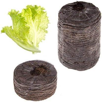 Tregren Kit de graines Laitue pour Potager dint/érieur autonome R/écoltez vos salades /à la maison en quelques semaines et sans effort ! Kit de 2 capsules pr/êt /à pousser avec graines de Laitue