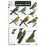 Guide to the Top 50 Garden Birds (Field Studies Council Occasional Publications)