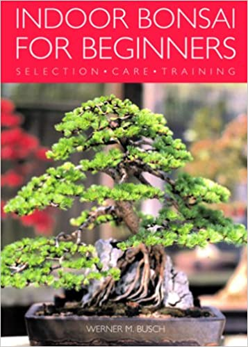 indoor bonsai for beginners selection care training