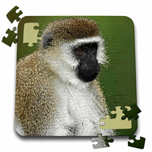 Black Faced Vervet Monkey - Danita Delimont - Monkeys - Black-faced Vervet Monkey, Lake Nakuru, Kenya - AF21 AJE0858 - Adam Jones - 10x10 Inch Puzzle (pzl_131834_2)