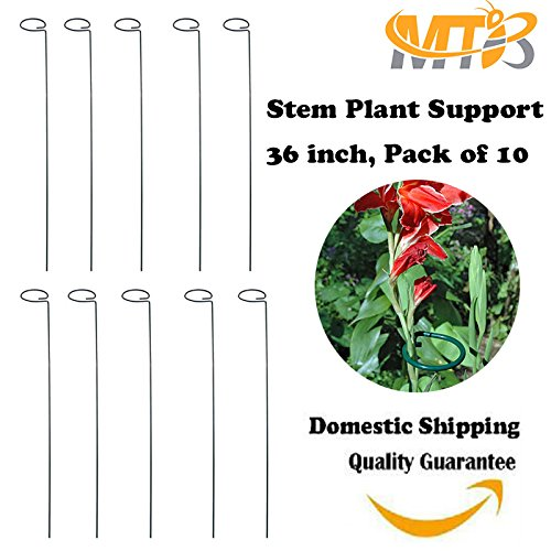 MTB 36 inch Single Stem Plant Support Stakes, Pack of 10 (Plant Peony Support)