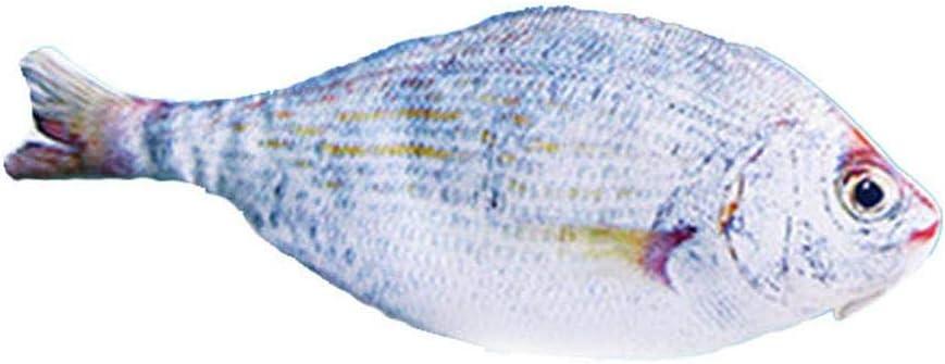 Clarashop Estuche de lápices Forma de pez Bolso de lápiz con Cremallera Muchacha de Dibujos Animados niño niño Estuche de lápiz Titular de la Pluma del Estudiante Papelería: Amazon.es: Hogar
