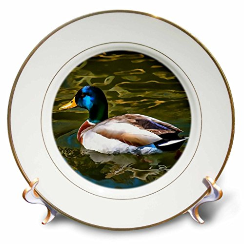 3dRose Taiche - Acrylic Painting - Mallard Duck - The Son Of A Duck Is A Floater - 8 inch Porcelain Plate (cp_284716_1)
