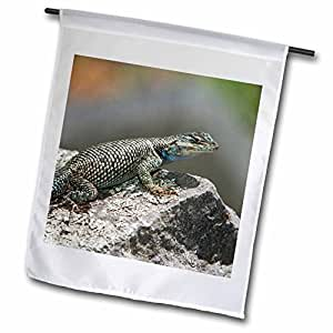 Danita Delimont - Lizards - Mountain Spiny Lizard, Madera Canyon, Arizona - NA02 RNU0687 - Rolf Nussbaumer - 18 x 27 inch Garden Flag (fl_84555_2)