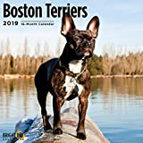 Boston Terrier 2019 Wall Calendar