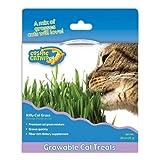 Cosmic Pet Kitty Cat Grass