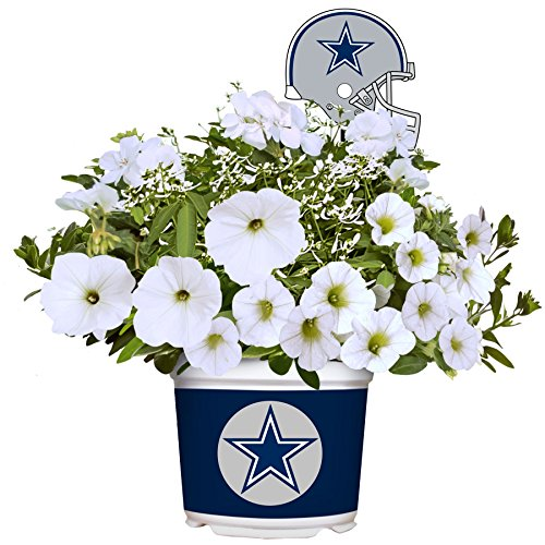 Team Pride Summer Flower Mix - Live Plants - (Dallas Cowboys)