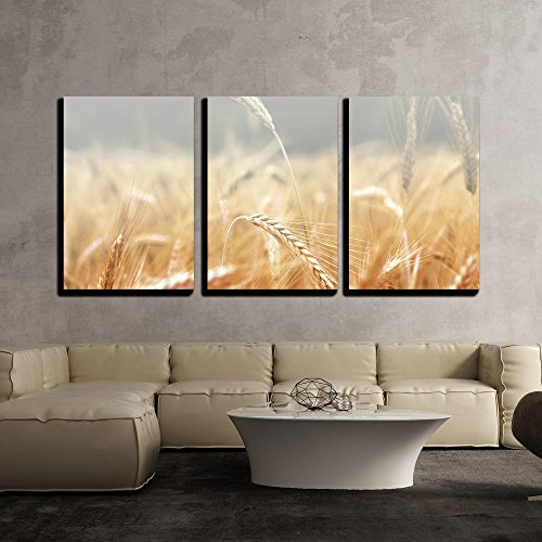 wall26 - 3 Piece Canvas Wall Art - Spikelets of Wheat, Illuminated by Bright Sunshine. Wheat Field - Modern Home Decor Stretched and Framed Ready to Hang - 16