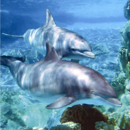Paradise Music Dolphin Cd Card 1 Greeting Card