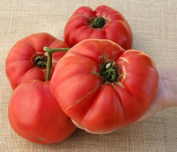 (Tomato Seeds German Queen