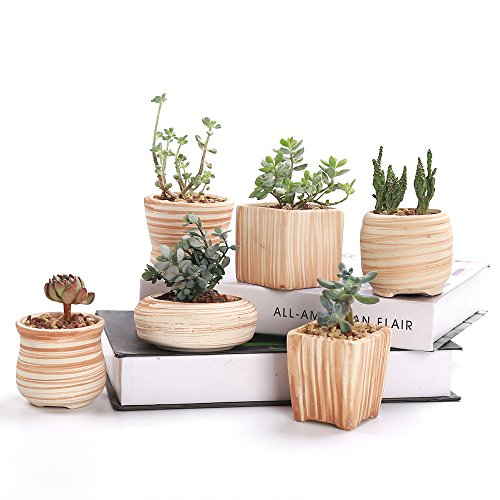 SUN-E 6 in Set 3 Inch Ceramic Wooden Pattern Succulent Plant Pot Cactus Plant Pot Flower Pot Container Planter Gift Idea
