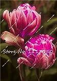 ice cream planter - 30PCS Tulip Seeds, Aroma Tulip Plants,Rare Ice Cream,Flower Pot Planters, DIY for Home and Garden,Bonsai Plants for Decoration 12