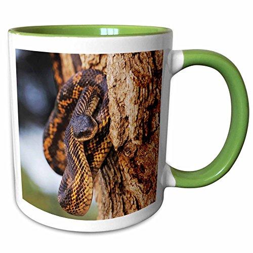 Texas Rat Snake (3dRose Danita Delimont - Snakes - Texas Rat Snake, Lake Corpus Christi, Texas - NA02 RNU0809 - Rolf Nussbaumer - 11oz Two-Tone Green Mug (mug_84627_7))