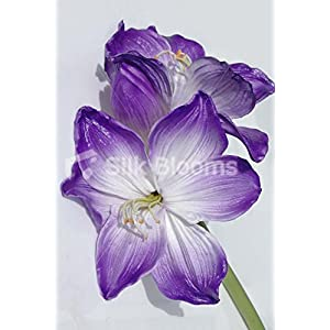 Artificial Stem of 2 Fresh Touch Purple Tipped Amaryllis 7
