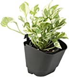 CAPPL Vertical Garden Wall Hanging Pot (Black, Pack of 8)
