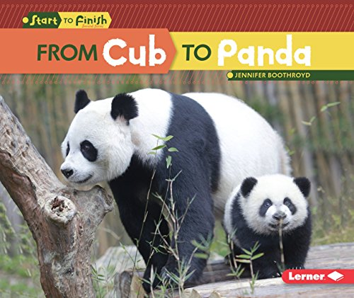 From Cub to Panda (Start to Finish: Second Series) - Panda Cubs