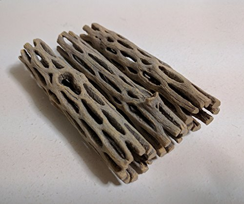 3 Pieces 4 inches Long Natural Cholla Wood for Aquarium Decoration Shrimp Crab Pleco by SoShrimp