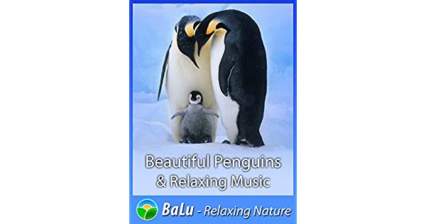 Amazon co uk: Watch Beautiful Penguins & Relaxing Music