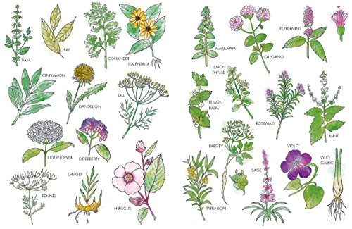 The Art of Herbs for Health: Treatments, tonics and natural home remedies (Art of series) by Kyle Books (Image #4)