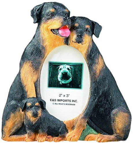 rottweiler pictures - 3
