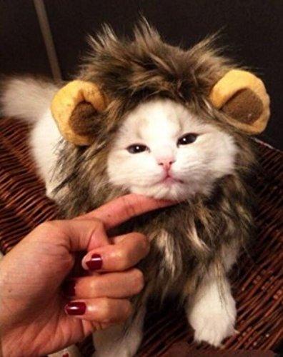 PRIMI Hund Katze Halloween Kleid Haustier Kostü m Lö we Mane Perü cke Kleid