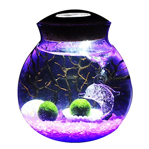 OMEM Valentine gifts for kids algae moss balls seed Glass jar Aquarium terrarium Kit (Two year old, purple)